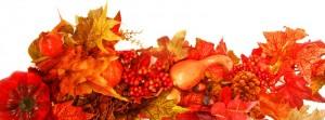 Fall Foliage1