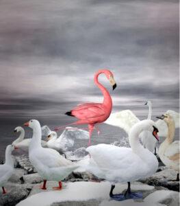 Unique Value Proposition Flamingo
